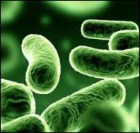 Friendly gut bacteria